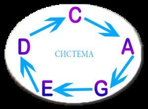 """Что же такое система """"CAGED""""? C-A-G-E-D - это 5 открытых форм аккордов"""